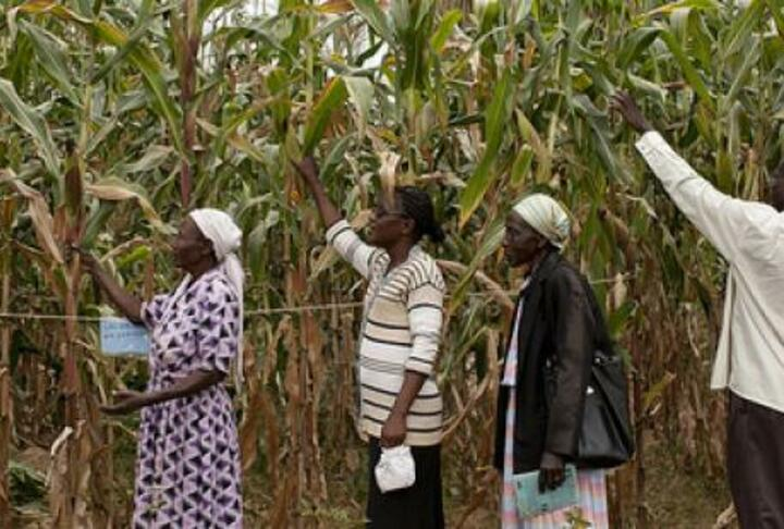 Helping Smallholders Make the Most of Maize Through Loans and Storage Technology: Evidence from Tanzania