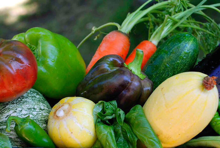 Inaugural XVii Program. Sustainable Food & Agriculture: Innovations & Finance