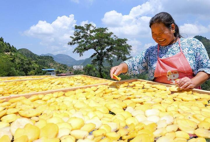 A farmer spreads chopped potatoes to dry at Fengjie County in China's Chongqing. Mobile banking has revolutionized the way farmers and small businesses operate.   © Getty Images