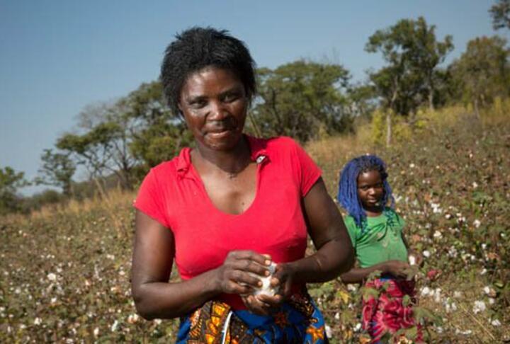 Digital Innovations in Smallholder Agricultural Insurance
