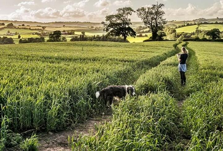 Agrifinance Report on the Rural Land Market in Britain